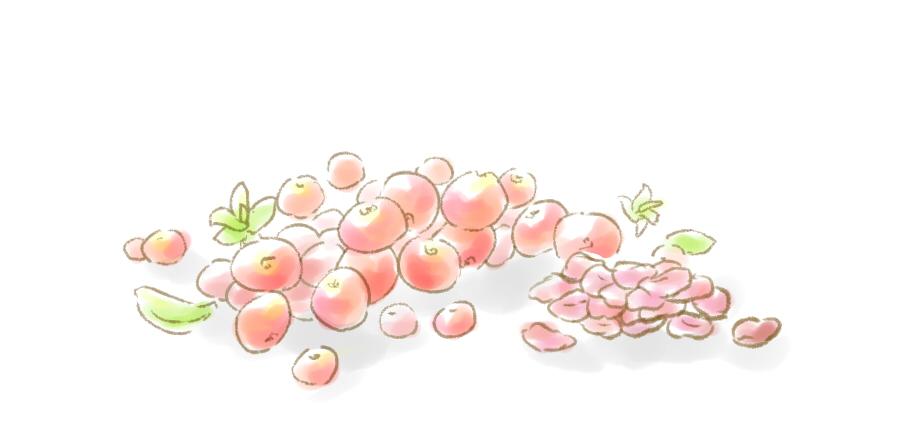 クランベリーのドライフルーツ