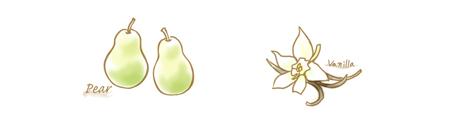 洋梨&白バニラのコンフィチュールのイラスト