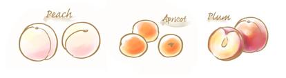 白桃&フランボワーズのコンフィチュールのイラスト