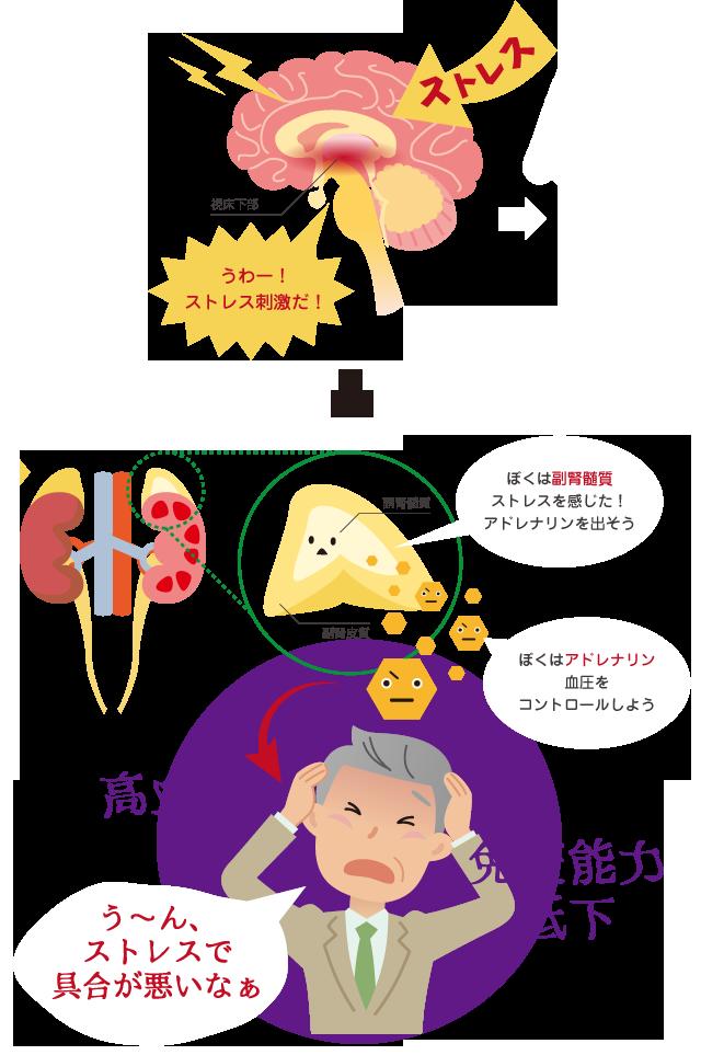 ストレスと高血圧の関係