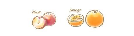 貴陽プラム&オレンジのコンフィチュールのイラスト
